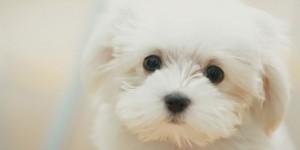 帶我家可愛的小白出門散步,結果有點糗,喂!你哪位??