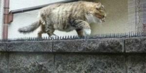 這隻喵喵每天都穿過防貓刺刺墊,這其中一定有什麼目的,讓我們看看他到底想幹嘛...