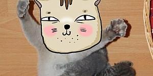 毛小孩衝上來吵著喝ㄋㄟ ㄋㄟ,你能想像貓媽媽的冏表情嗎?