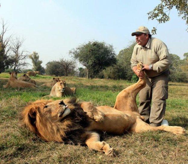 南非狮王饲养员,狮子苍蝇v狮王都靠他(~~)~*蜻蜓是怎么吃掉脚掌图片